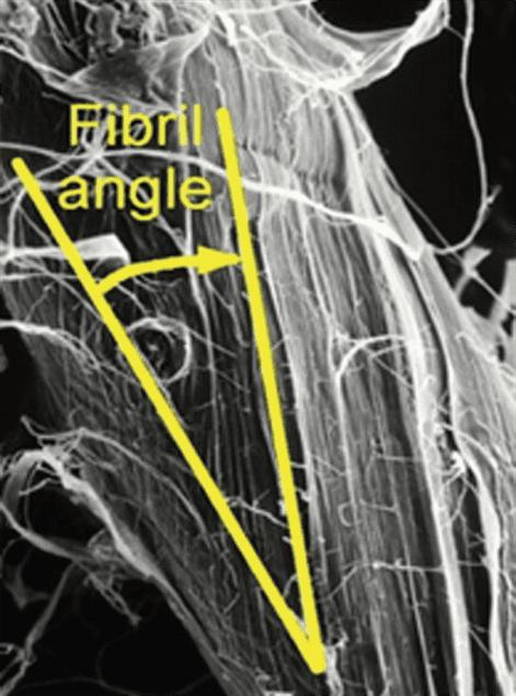 Fibril angle